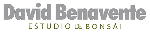 Estudio Bonsái David Benavente